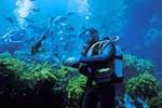 Scuba-diving and Snorkelling Goa